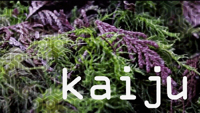 Kaiju – forage. Video by Dylan Davies