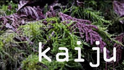 Kaiju – forage. Video by Dylan Davies