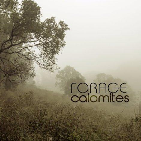 Calamites EP – forage
